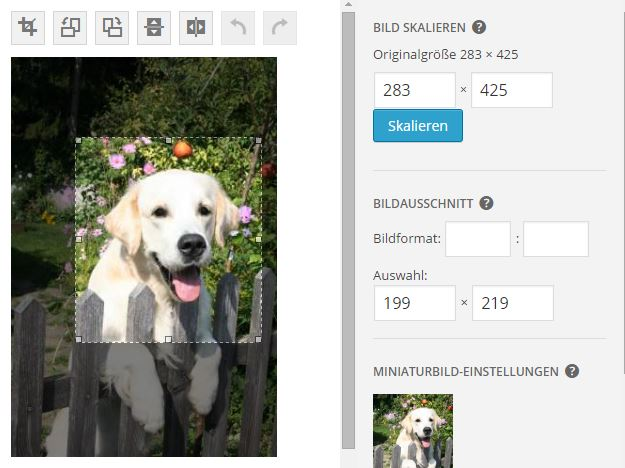 Bild skalieren WordPress